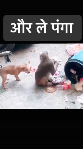 🐧 વન્યજીવન ફોટોગ્રાફી 🐇 - ShareChat