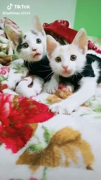 cute cat 😍 - ShareChat