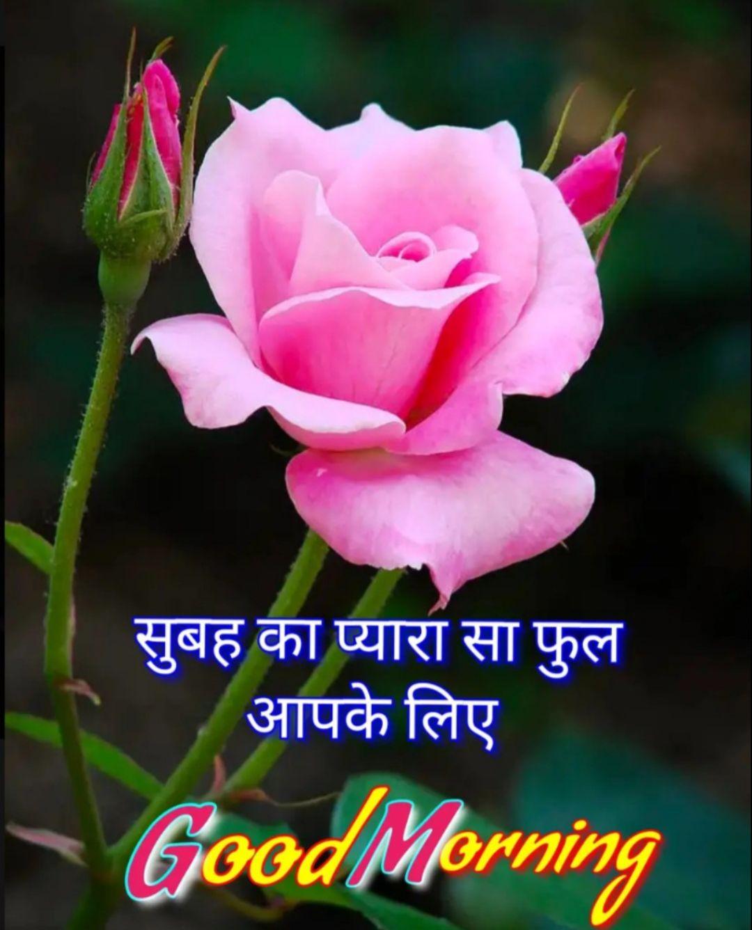🌷शुभ सोमवार - सुबह का प्यारा सा फुल आपके लिए Good Morning - ShareChat