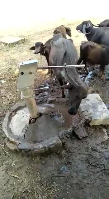 ಪ್ರಾಣಿ ಜಗತ್ತು - ShareChat