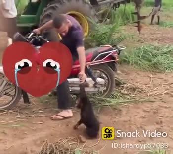 🐅 ਜਾਨਵਰਾਂ ਦੀ ਦੁਨੀਆ - ShareChat