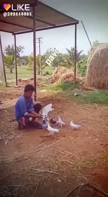 ಟಿ ನರಸೀಪುರದ ಮಹಾಕುಂಭಮೇಳ - LIKE @ 209319865 QUIKEAPP - ShareChat