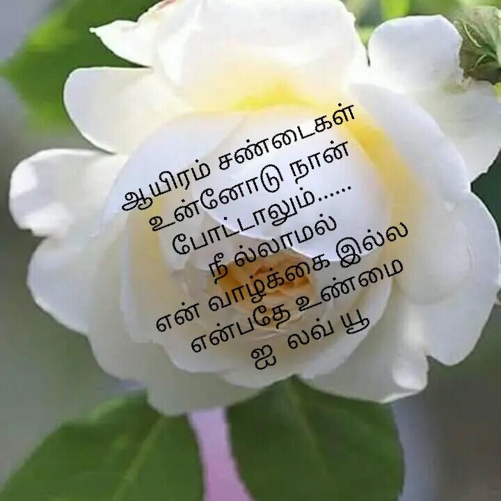காதல் கவிதை - ஆயிரம் சண்டைகள் உன்னோடு நான் போட்டாலும் . . . . . . நீ ல்லாமல் என் வாழ்க்கை இல்ல என்பதே உண்மை ஐ லவ் யூ - ShareChat