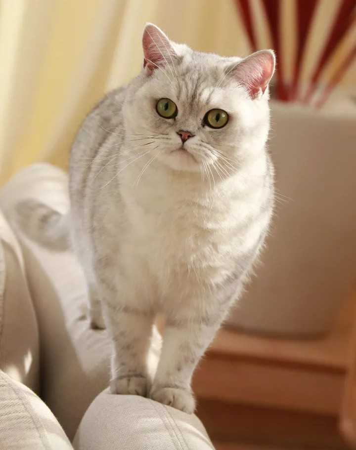 cat lovers - ShareChat