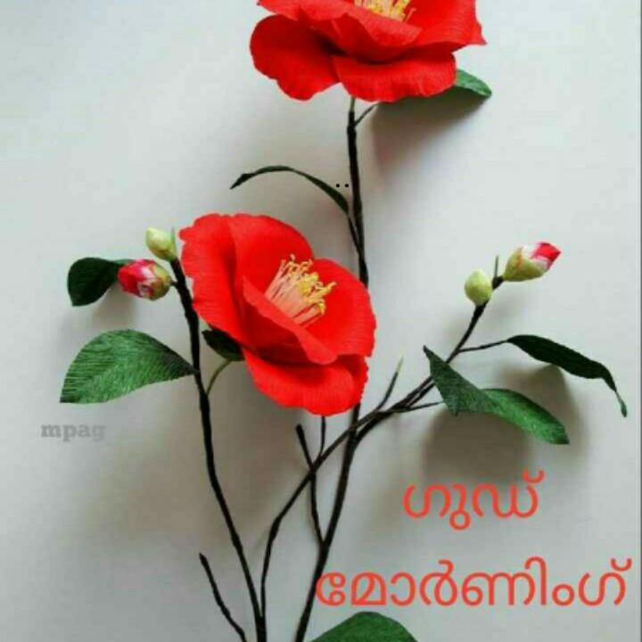 🌞 ഗുഡ് മോണിംഗ് - mpag ഗുഡ് മോർണിംഗ് - ShareChat