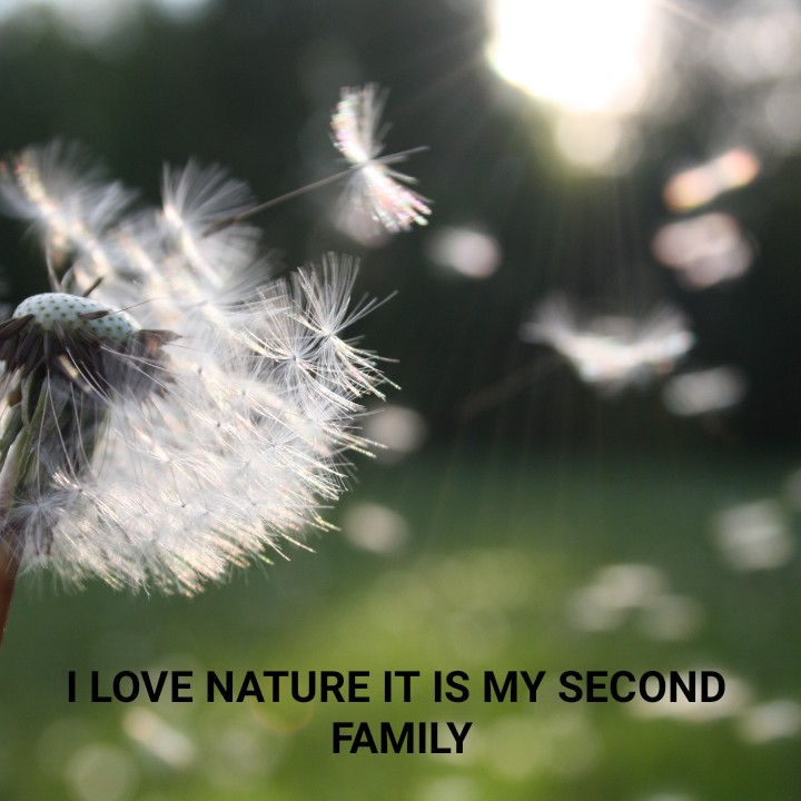 nature - I LOVE NATURE IT IS MY SECOND FAMILY - ShareChat