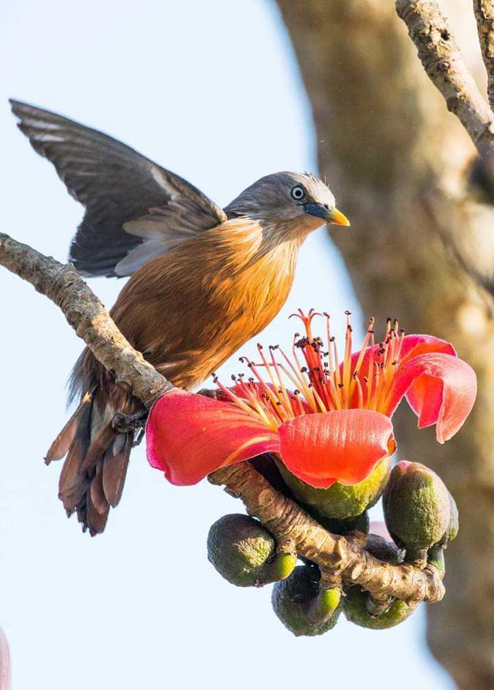 bird - ShareChat
