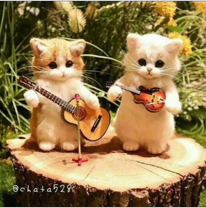 💗 cute cat 💗 - @ chat a 528 - ShareChat