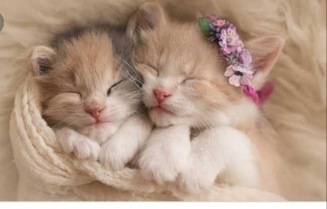 cute cats - ShareChat
