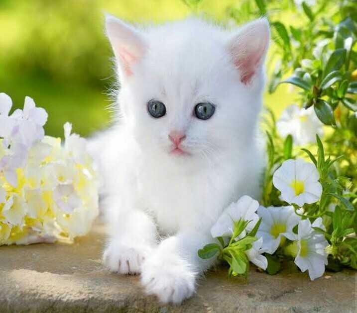100 Best Images 2020 Cute Cats Whatsapp Group Facebook Group Telegram Group