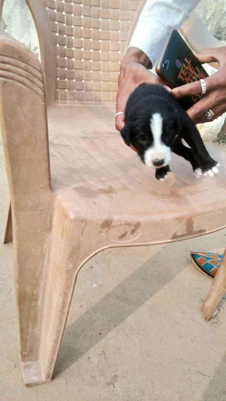 cute dog - ShareChat