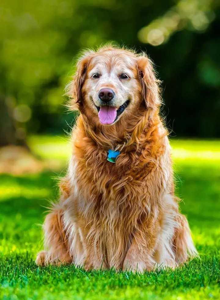 cute dog 🐶 🐶 - SU - ShareChat