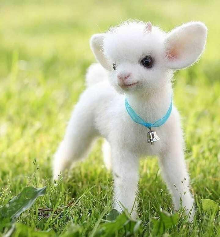 cute dolls - ShareChat