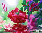 Sanjay Dutt - Pastel Dreams PicMix - ShareChat
