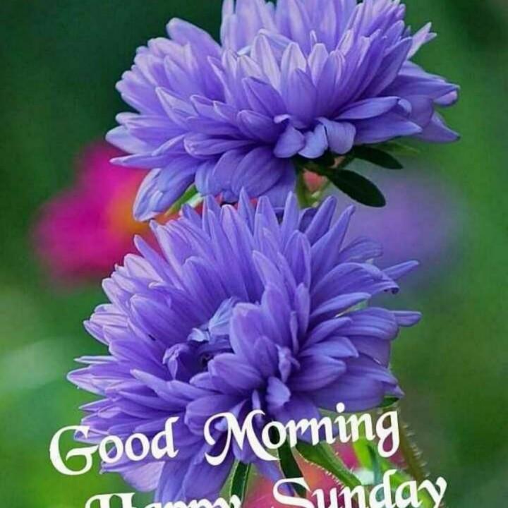 সু প্রভাত - Good Morning Sunday - ShareChat