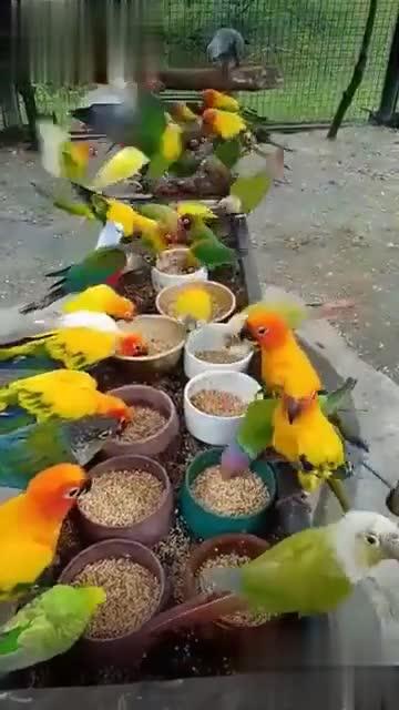 🎑 കൗതുക കാഴ്ചകള് - ShareChat