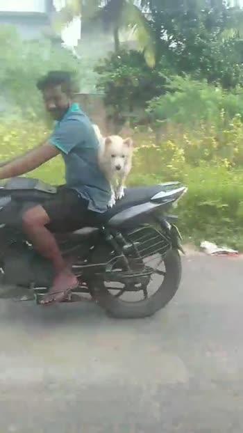 🐕செல்ல பிராணி - ShareChat