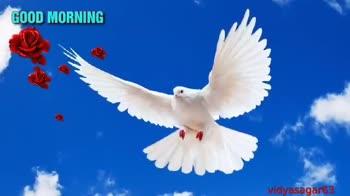 🌹😁good morning😁🌹 - vidyasagar63 vidyasagar63 - ShareChat