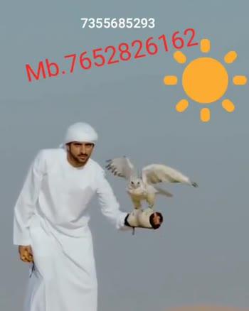👌 ਘੈਂਟ ਵੀਡੀਓਜ - 7355685293 Mb . 7652826162 @ thar _ wale _ yaar _ 7355685293 Mb . 7652826162 - ShareChat