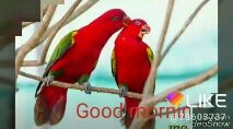 शुभ बुधवार - only for good morning LIKE @ 796087317th VideoShow Good Mornin LIKE Lonice day @ 79608 . 7377th VideoShow - ShareChat