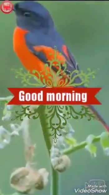 goodmornig - ShareChat