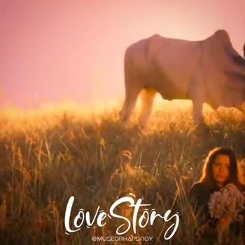 malayalam - Love Story CMUSEDRHAPSODY Love Story @ MUSEDRHAPSODY - ShareChat