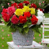 💐Flower photography - PicMix - ShareChat