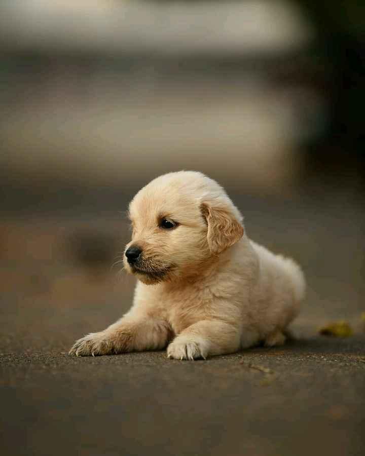 dog lover - ShareChat