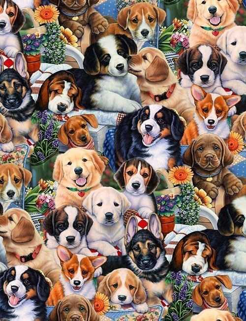 dog lovers - UUTA - ShareChat