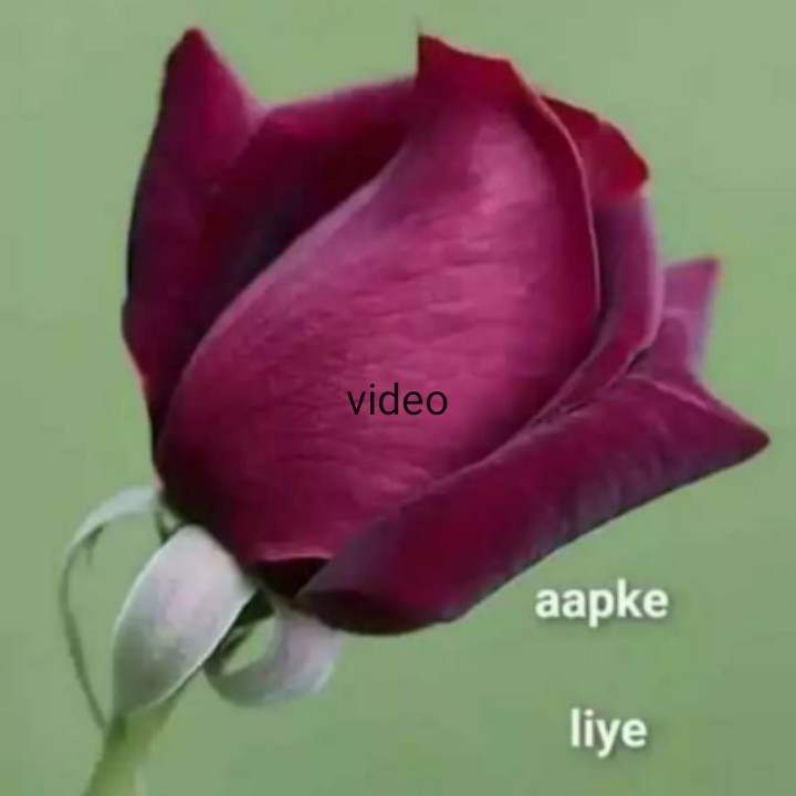 🎂 हैप्पी बर्थडे विवेक ओबेरॉय - video aapke liye - ShareChat