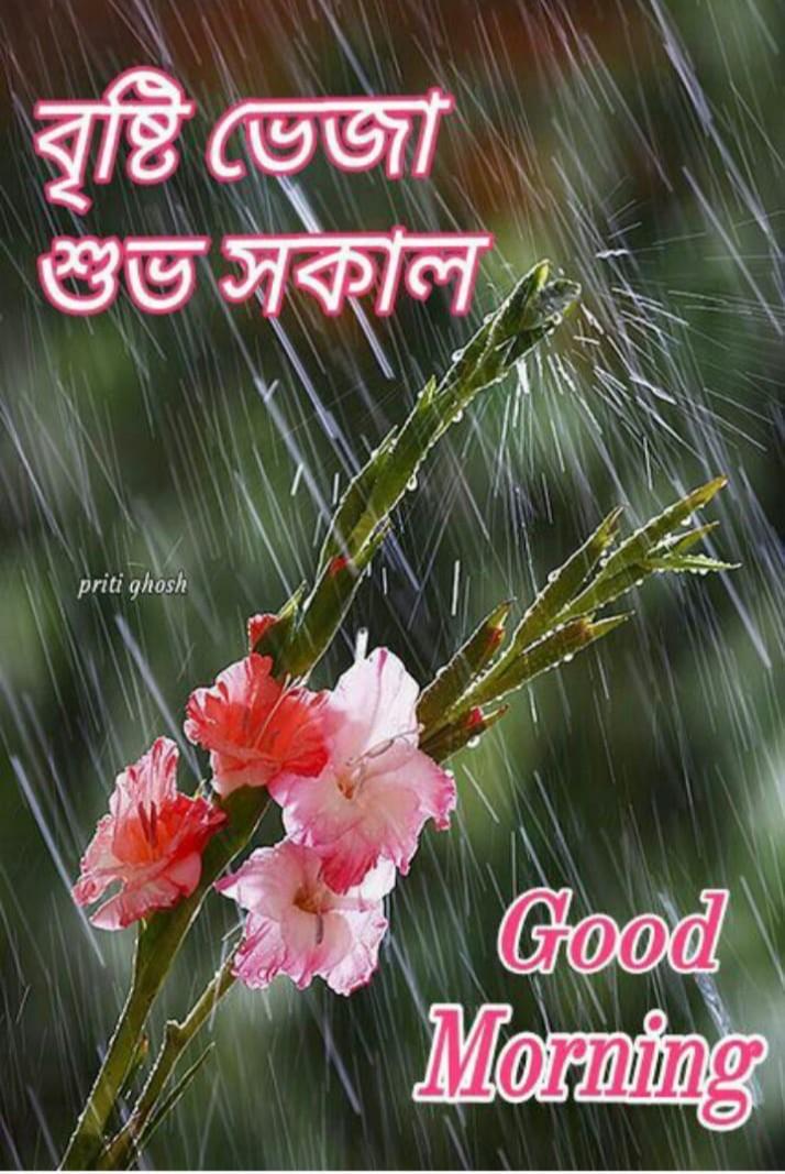 সুপ্রভাত 🌞 - বৃষ্টি ভেজা শুভ সকাল priti ghosh @ @ @ @ @ Hatha  - ShareChat