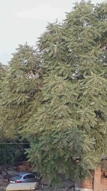 पेड़ का वीडियो☘ - ShareChat