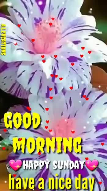 🌅శుభోదయం - ALCREATIONS GOOD MORNING HAPPY SUNDAY have a nice day ALCREATIONS SQOD GOOD MORNING HAPPY SUNDAY have a nice day - ShareChat