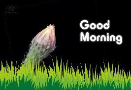 🌞সুপ্রভাত - premium wishes Good Morning - ShareChat