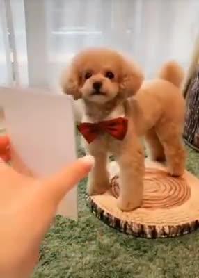 pet love - ShareChat