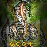 🙏 jay goga 🙏 - Yoga - ShareChat