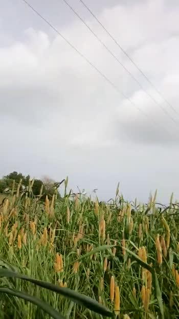 📽 ફેવરિટ ડાયલોગનો વિડિઓ - ShareChat