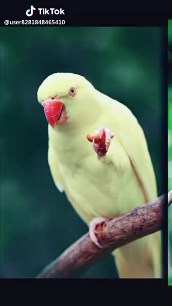 💞birds.., - ShareChat
