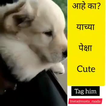 cute dog - आहे का ? याच्या पेक्षा Cute Tag him Insta @ nusta raada आहे का ? याच्या पेक्षा Cute Tag him Insta @ nusta _ raada - ShareChat