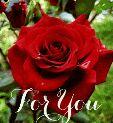 Love You Zindagi - ShareChat