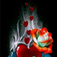 🌹SHARK SAMY🌹 - Author on ShareChat: Funny, Romantic, Videos, Shayaris, Quotes