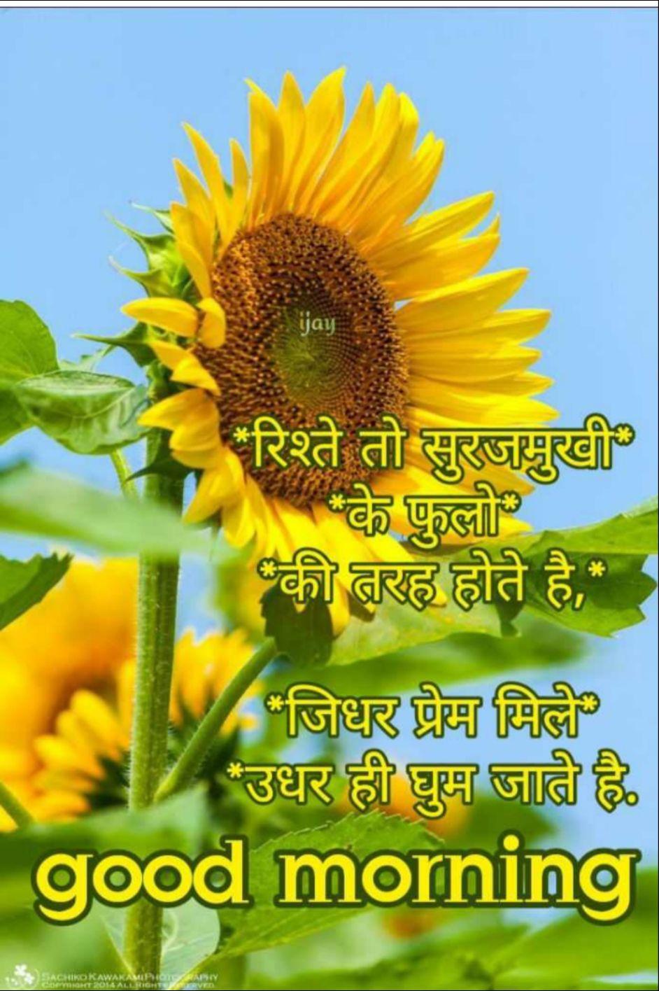 🙏खम्मा घणी - रिश्ते तो सुरजमुखी के फुलो की तरह होते है , जिधर प्रेम मिले उधर ही घुम जाते है . good morning DRAWAKAN - ShareChat