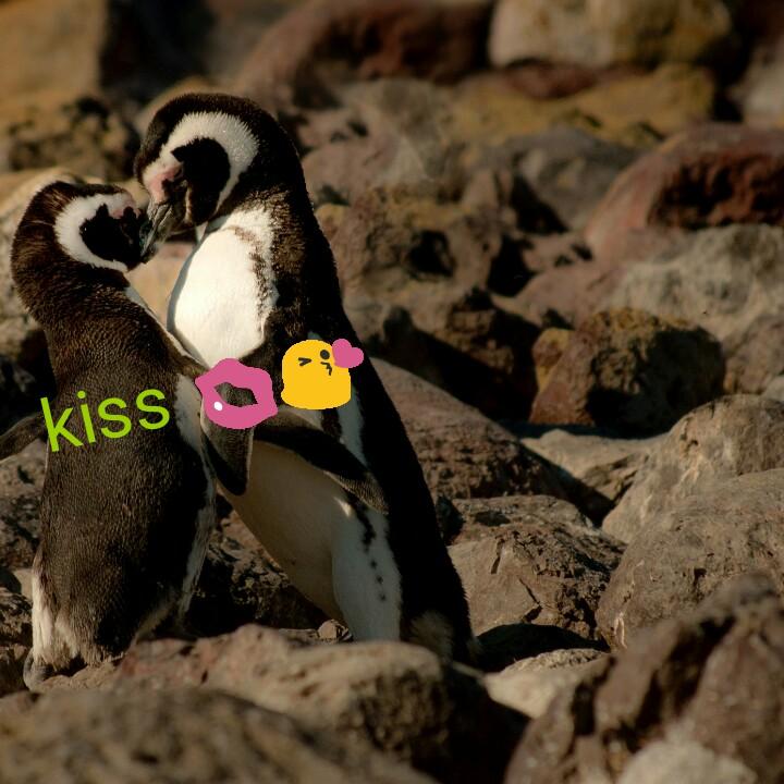 🌹प्रेमरंग - kiss . - ShareChat