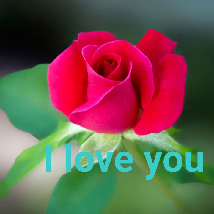 i love  you - Tove you - ShareChat