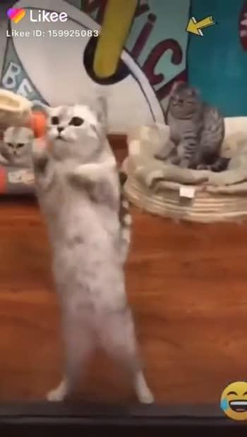 💗 cute cat 💗 - ShareChat