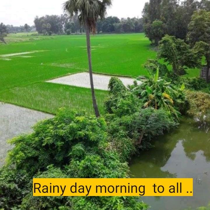 বর্ষাকাল ⛈ - Rainy day morning to all . . - ShareChat