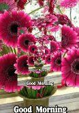 गुड मॉर्निंग शायरी - Good Morning Good Morning Photo Window - ShareChat