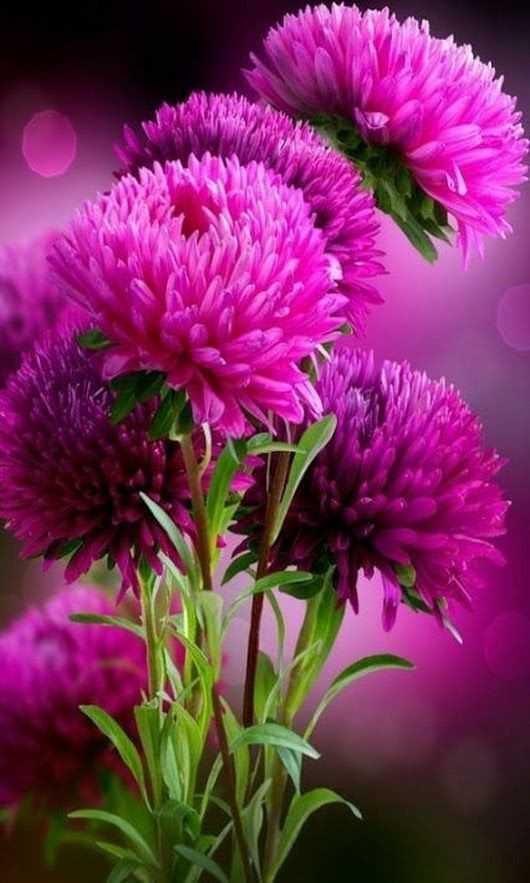 flower - ShareChat