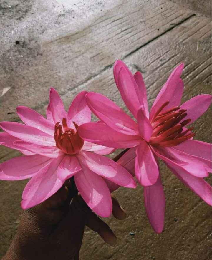 flower 🌸 - ShareChat