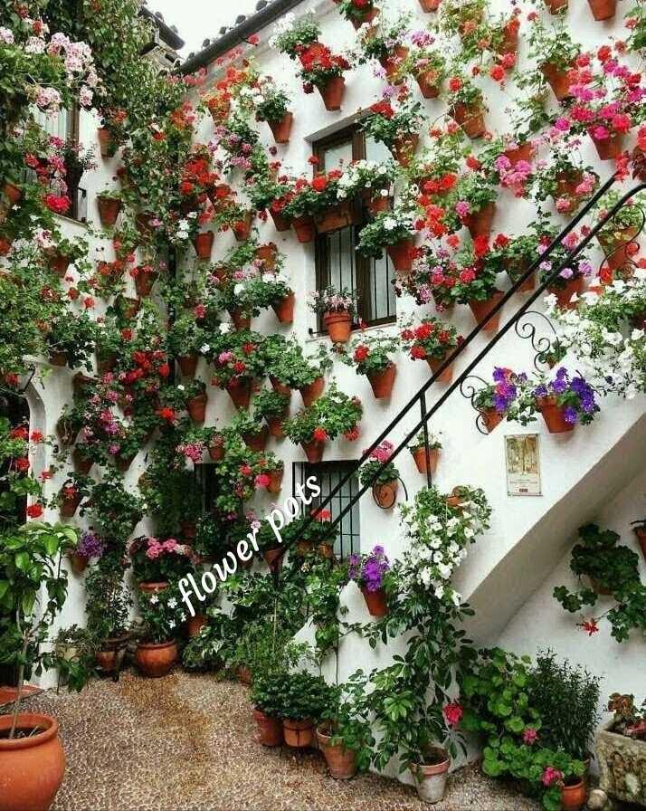 flower - flower pots - ShareChat